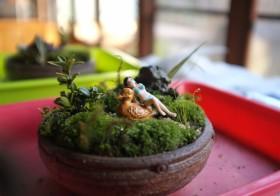 【2014ワークショップ】「苔が織りなす日本の盆景美を堪能」苔庭づくりのご報告