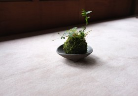 【2014ワークショップ】まぁるい盆栽を愛でる!?苔玉づくりのご報告