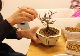 【2013ワークショップ】豆盆栽で手のひら創造美を体験のご報告