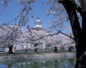 鶴岡公園「お花見茶会」 / 日本の歩き方