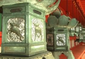 灯りのメッセージ「灯籠」の幻影・・・思いを込めて寄進された奈良・春日大社の3000基【美の壺「夏の灯籠」】