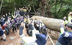 諏訪大社御柱祭 厳かに 伐採スタート 上社、辰野で / 長野