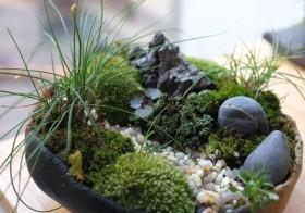5月からは、「苔が織りなす日本の盆景美を堪能」オリジナル苔庭づくり★