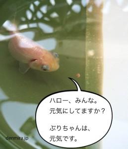 20160425_4301207