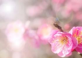 七十二候「霞始靆」(かすみはじめてたなびく)と運気UPアイテム / denmira blog