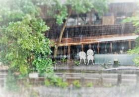 七十二候の「大雨時行」(たいうときどきにふる)と運気UPアイテム