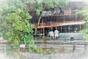 大雨時行01