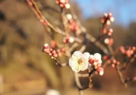 二十四節気「立春」・七十二候「東風解凍」(はるかぜこおりをとく)と運気UP術