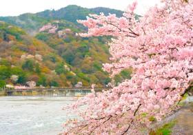 無形文化遺産の和食の中でも人気の京都 懐石料理を、お花見をしながら味わう!?嵐山で「折詰弁当付き宿泊プラン」販売開始